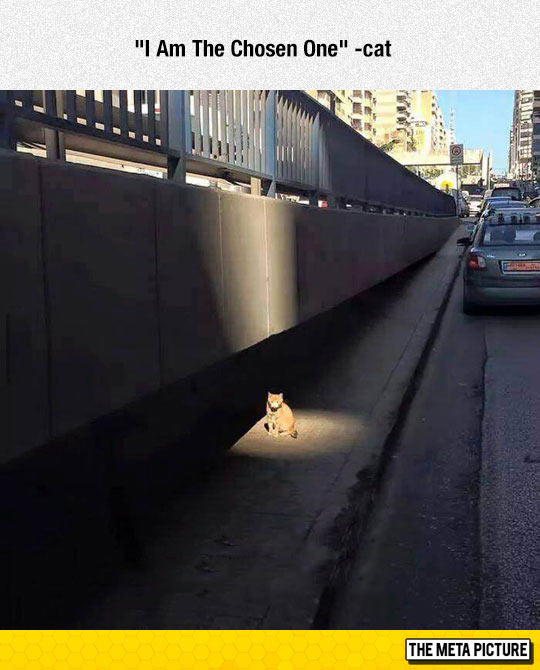 funny-cat-light-chosen-one-God
