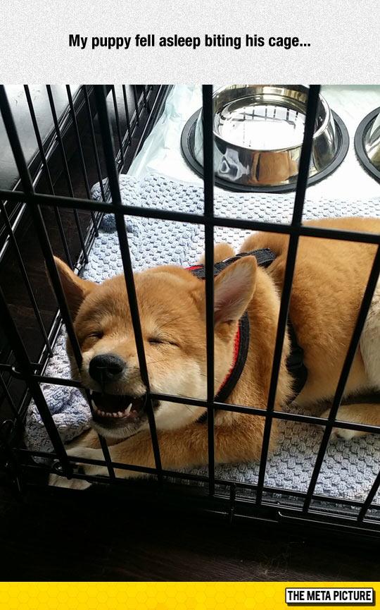funny-dog-biting-cage-sleeping