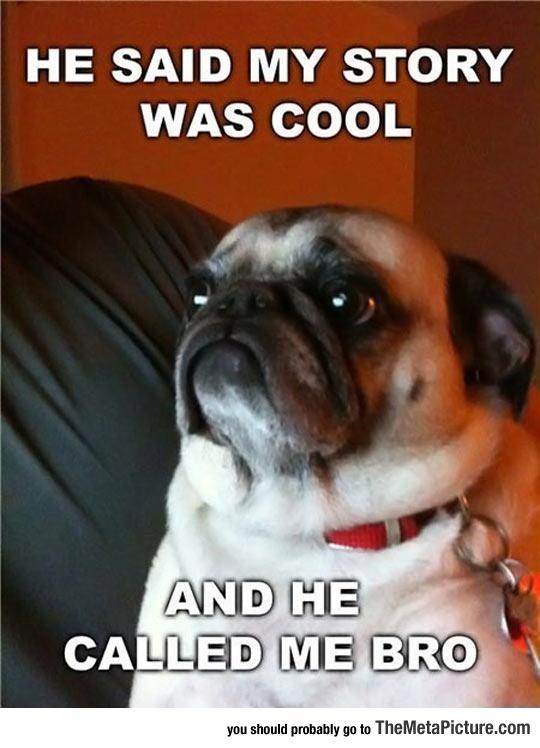 funny-dog-cool-story-bro-pug