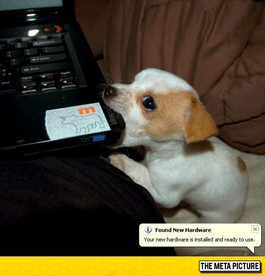 funny-dog-eating-computer-Windows-laptop