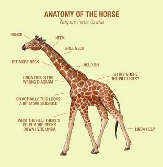 funny-giraffe-parts-anatomy-english