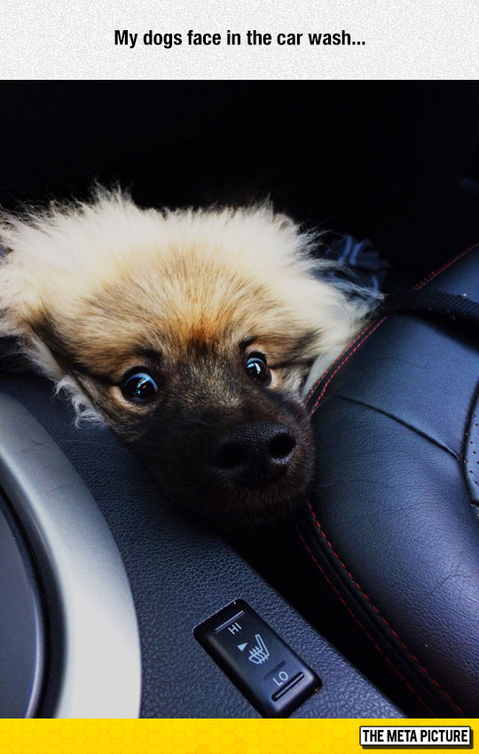 funny-hidden-dog-face-car