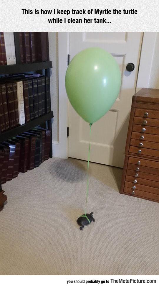 funny-tortoise-turtle-balloon-green