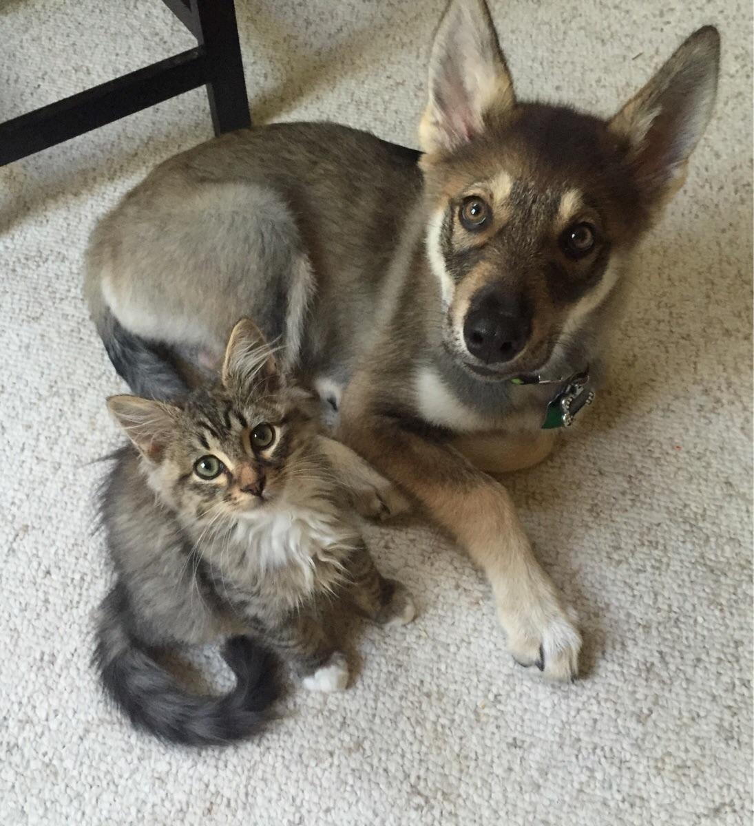 puppy pick out a buddy...