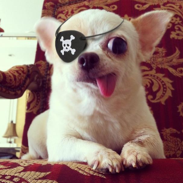 Captain Pirate Dog