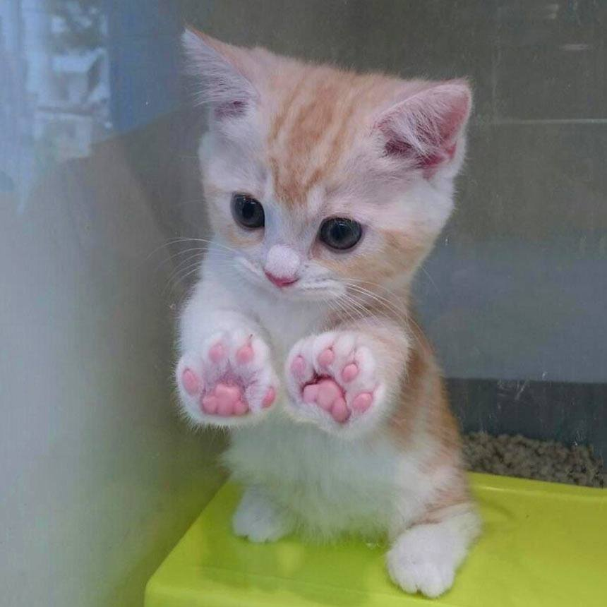 Jellybean toes