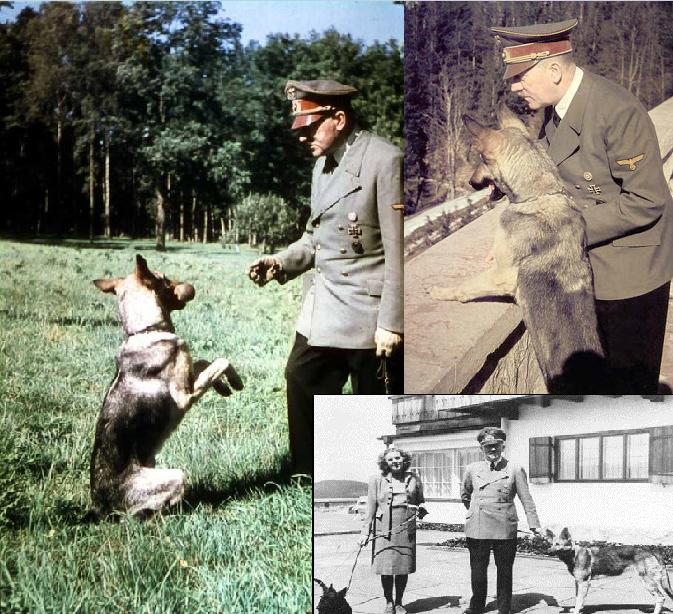 Some pics of Hitler and his dog Blondi .