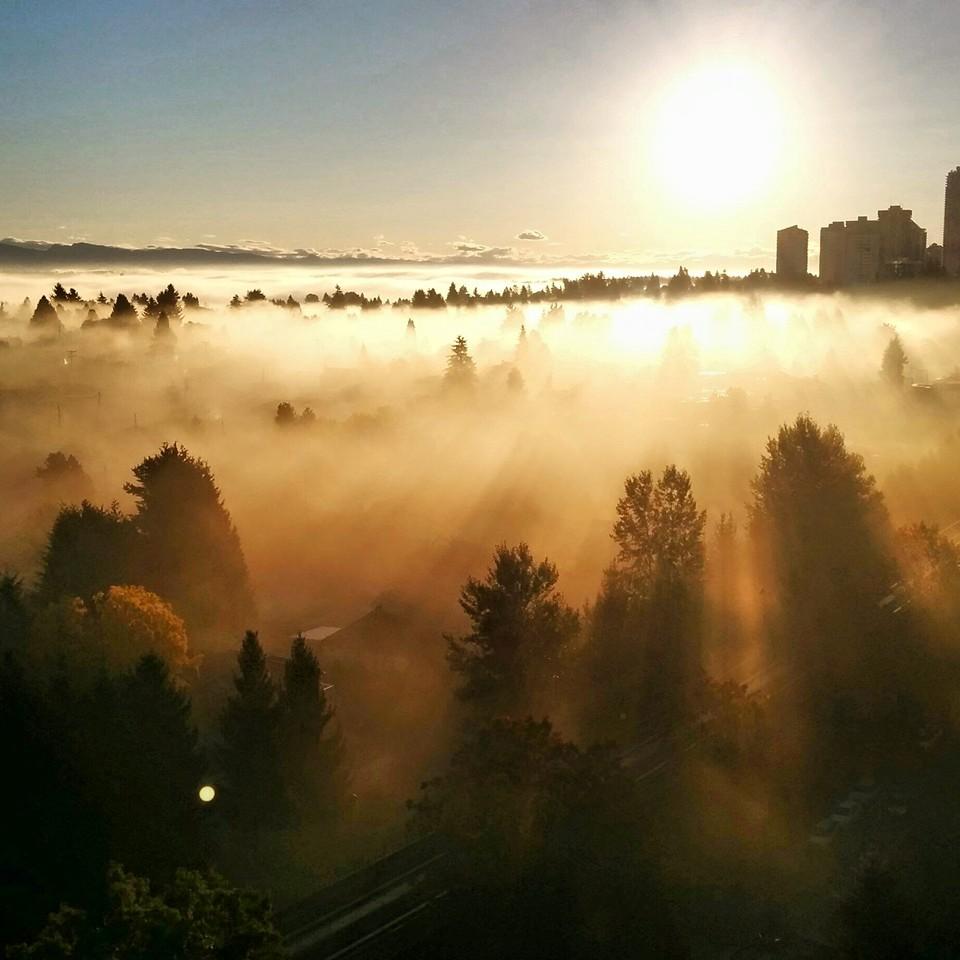 Sun rays in the morning fog