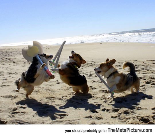 Epic Corgi Battle