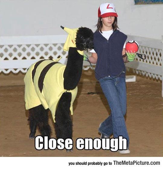 I Choose You, Alpacachu