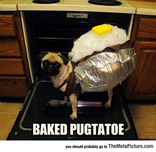 cool-Pug-dog-oven-baked-potato
