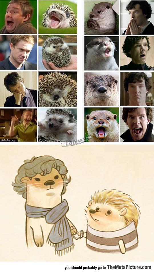 cool-Sherlock-Watson-hedgehog-otter