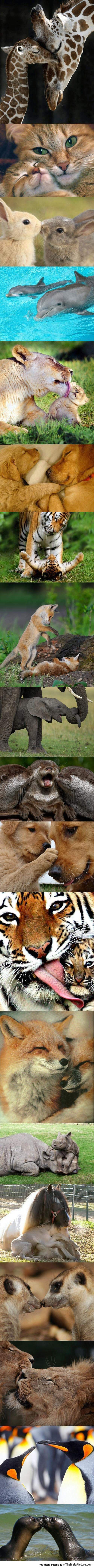 Animal Kingdom Love
