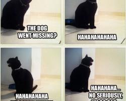 Sad News For This Kitty