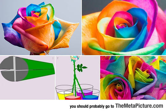 cool-bouquet-flowers-coloured-roses