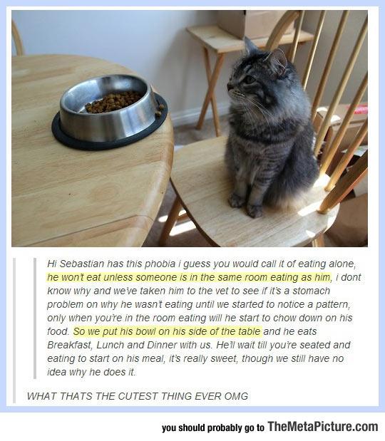 cool-cat-alone-phobia-eating
