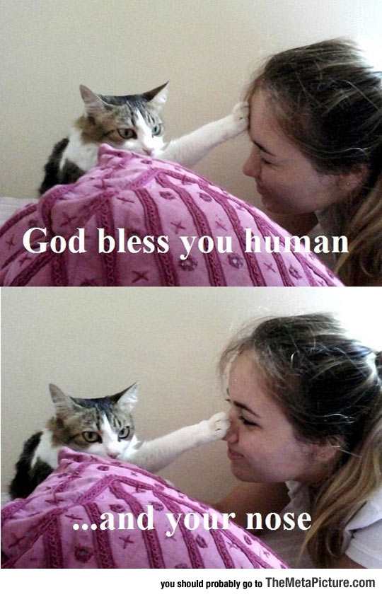 cool-cat-bless-girl-nose