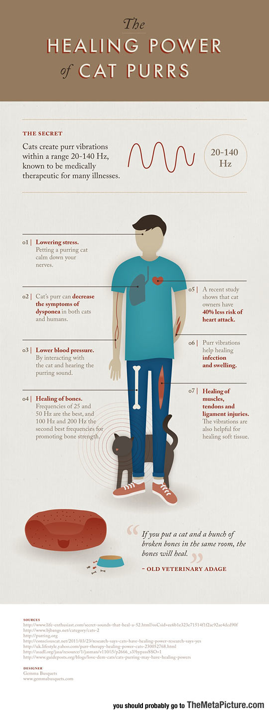 cool-cat-healing-powers