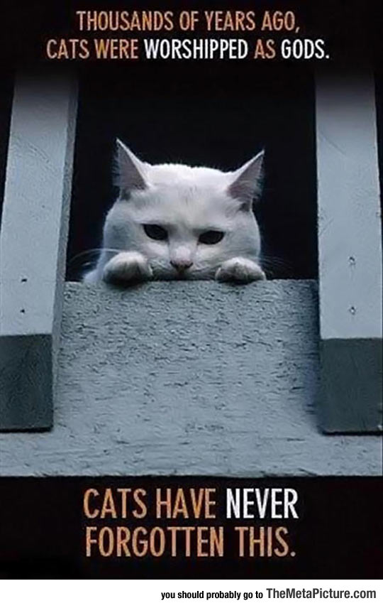 Cats Don