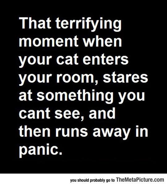 cool-cat-quote-panic