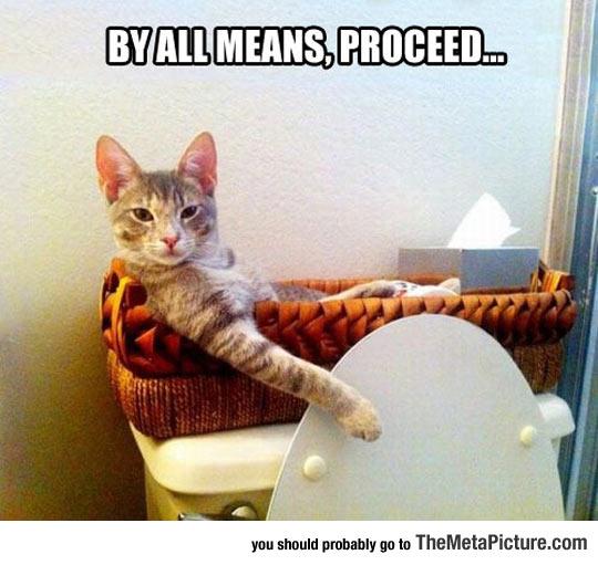 cool-cat-sit-bathroom-toilet-kitten