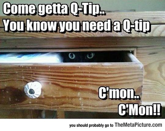 cool-cat-wardrobe-Q-Tip