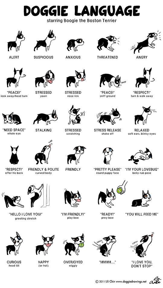 cool-dog-body-language