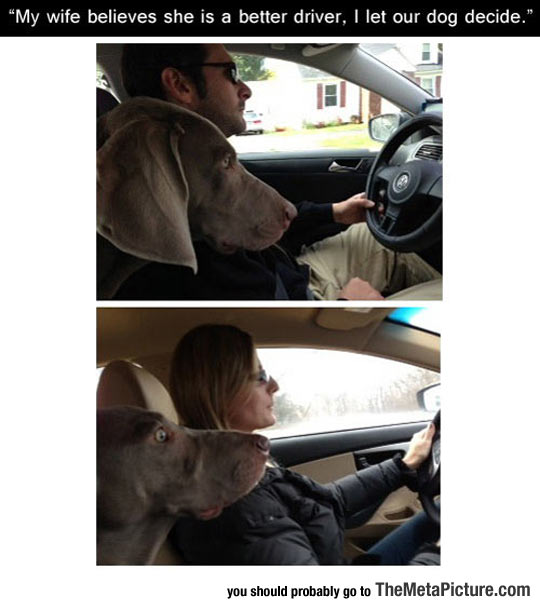 cool-dog-car-driving-wife