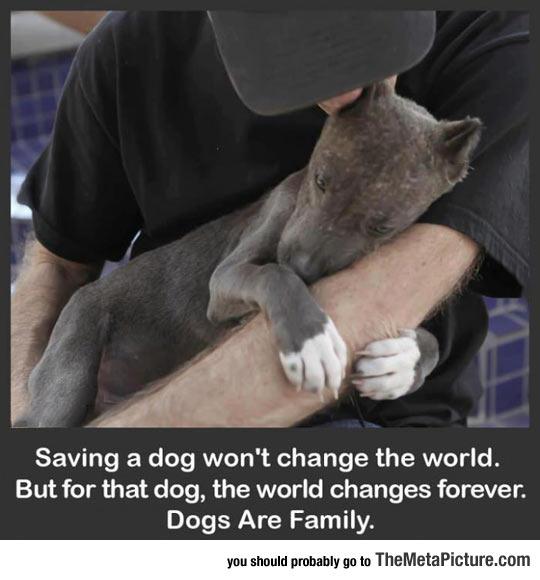 Saving A Dog