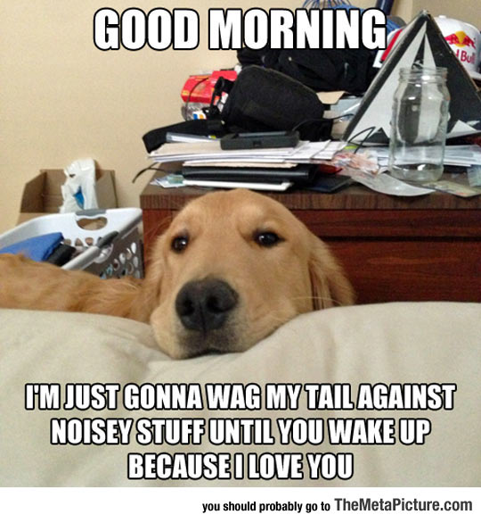 cool-dog-morning-wag-tail-noise-wake-up