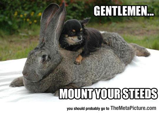cool-dog-riding-bunny-rabbit