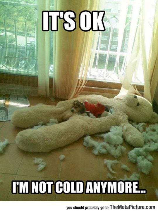 cool-dog-sleep-big-teddy-bear