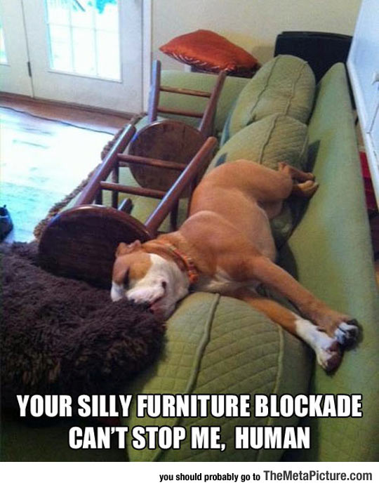 cool-dog-sleep-couch-furniture-blockade