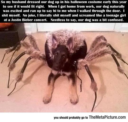cool-dog-spider-costume-scream