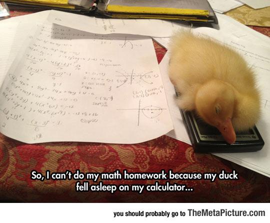 cool-duck-sleeping-calculator-homework
