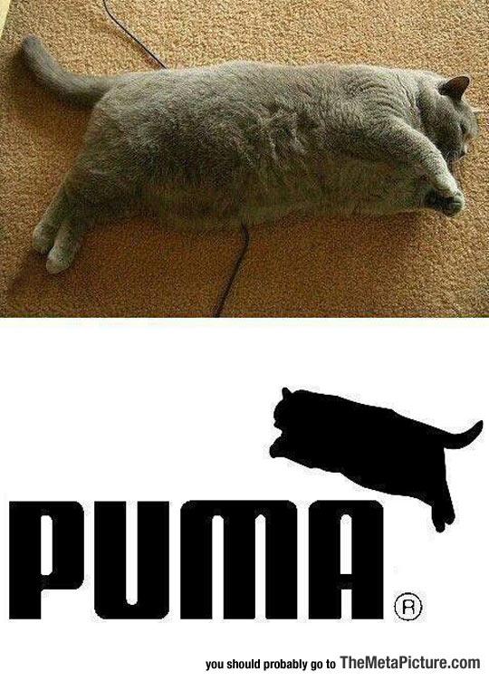 cool-fat-cat-Puma-logo