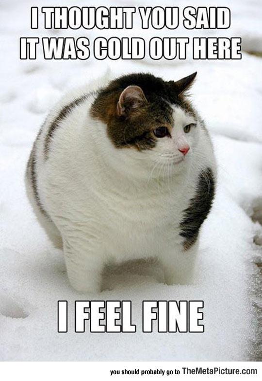 cool-fat-cat-snow