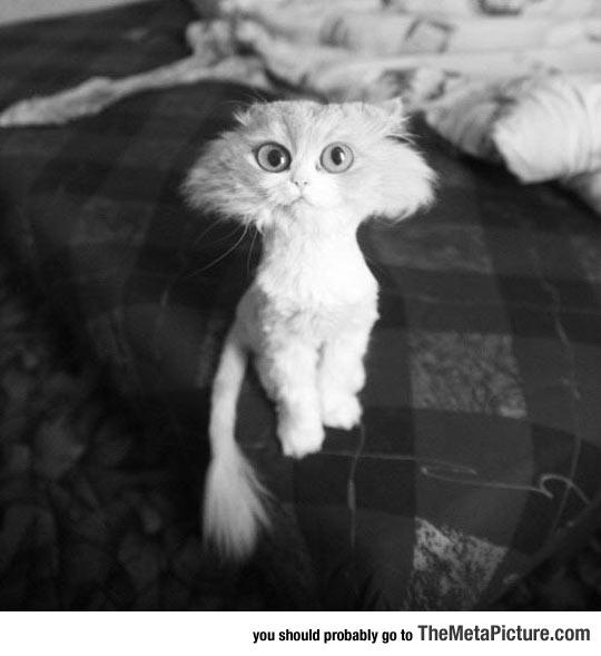 cool-fluffy-cat-hair-cut