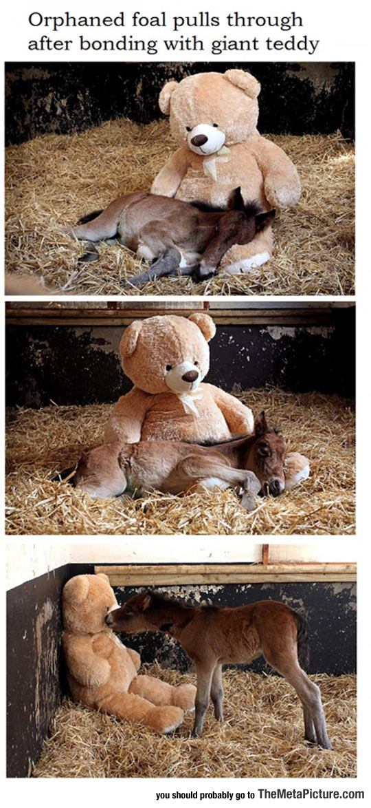 Orphaned Pony's Best Friend Is A Teddy Bear