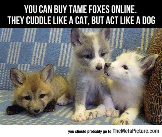 cool-fox-babies-puppies
