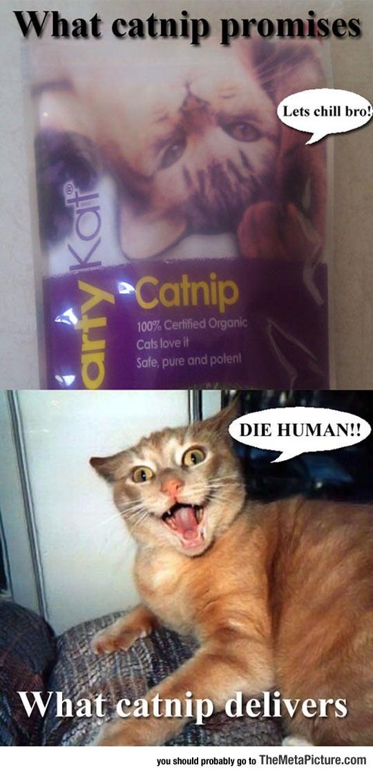 Catnip Promises