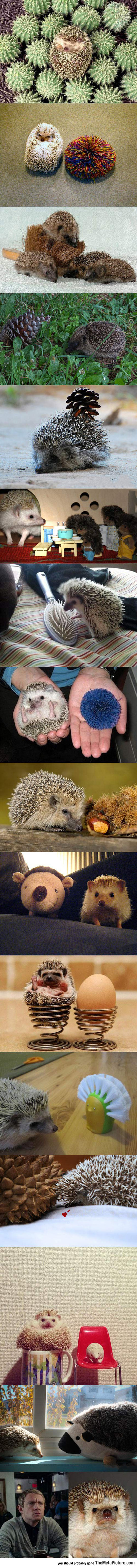 cool-hedgehogs-similar-look-alike-