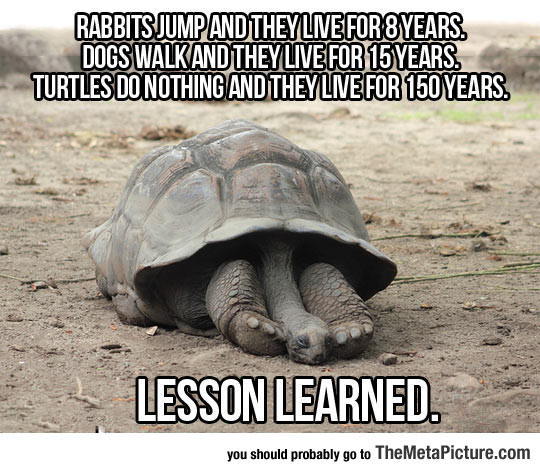 An Important Lesson We Should Learn From Turtles