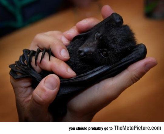 When Adorable Baby Bats Have Nightmares