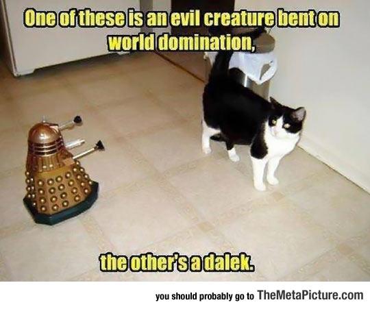 cool-little-cat-Dalek-robot