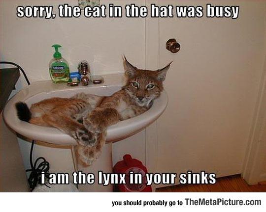 cool-lynx-sink-cat-looking
