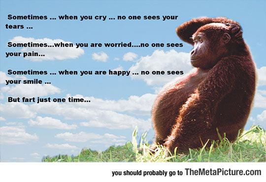 cool-monkey-scratching-head
