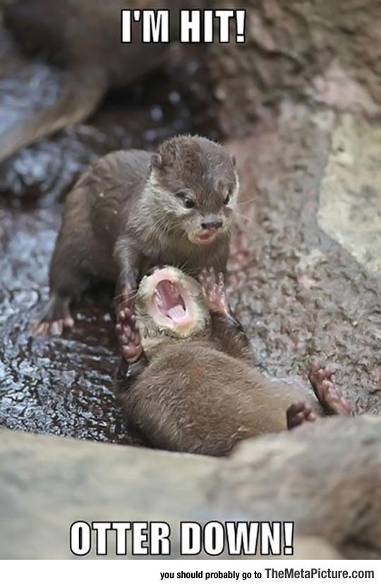 cool-otter-screaming-im-hit