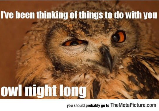 Such A Seductive Owl