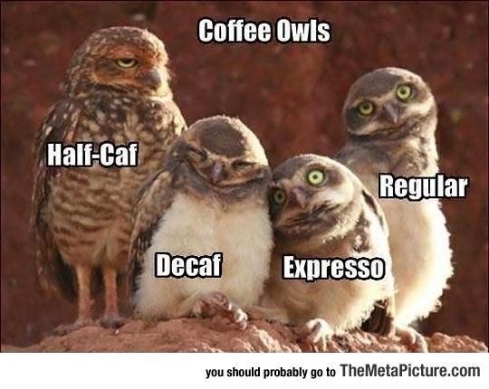 cool-owl-group-coffee
